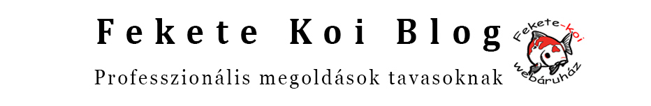 Fekete Koi Blog